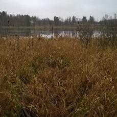 Tursiannotko Kotolahden vastarannalta nähtynä. Kuva: Vadim Adel/Pirkanmaan maakuntamuseo.